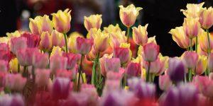 צבעים, מרקמים וניחוחות נפלאים פרחים באר שבע
